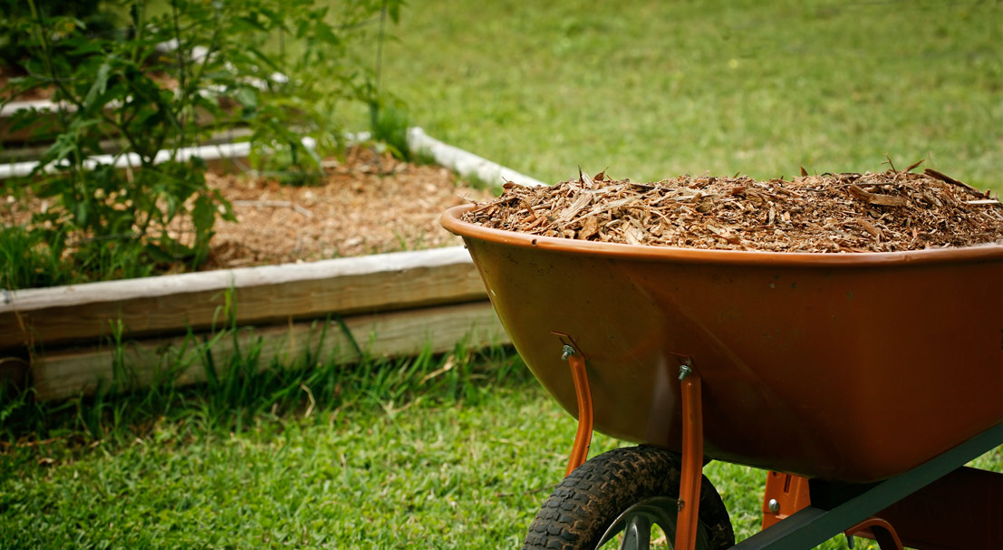 Spring Landscaping: 3 Quick and Easy Yard Sprucing Tips